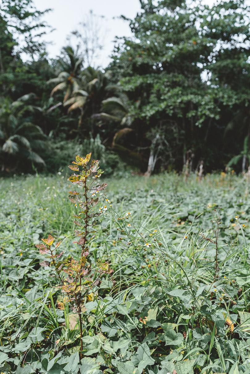 So much greenery at Zimbali Retreat