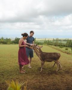Feeding the deer at Bois Cheri tea plantation