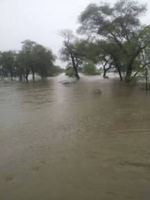 Dinga Rain 2014