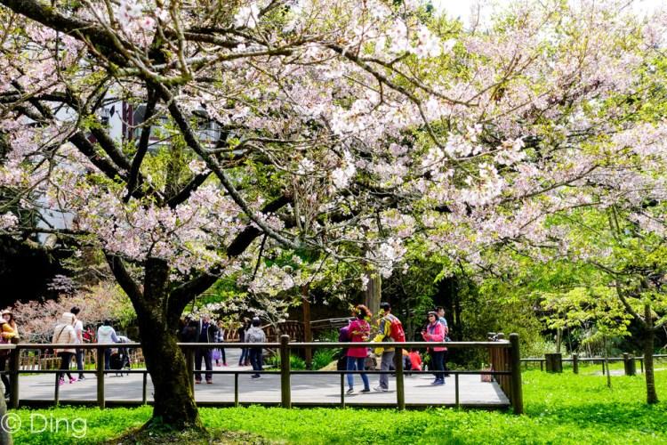 2020阿里山櫻花季懶人包  提供花季時間、阿里山花況、賞櫻路線、必看景點及交通方式攻略!