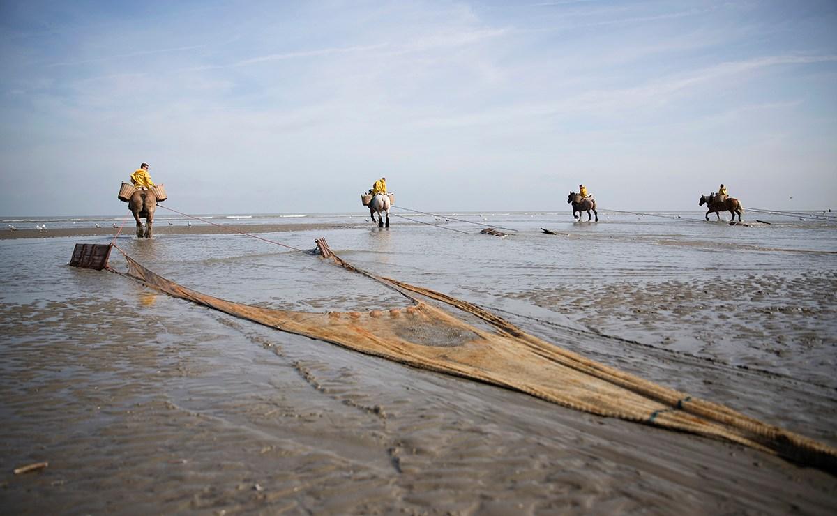 De paardenvissers: Werelderfgoed in Oosduinkerke