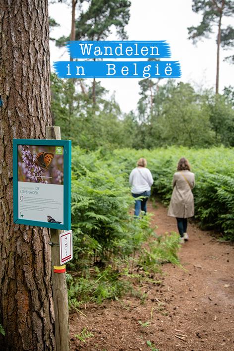 Prachtige wandeling Lovenhoek in de Kempen