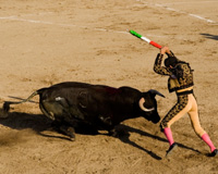 Help ban bullfighting today!