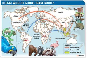world map of poaching के लिए चित्र परिणाम