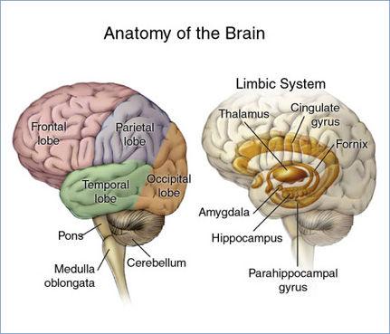 The Neuroscience of Bullying