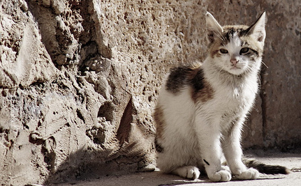 Israel Will Trap, Neuter and Return 45,000 Street Cats