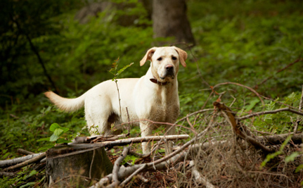 Dog Deaths Prompt Idaho to Consider Changing Trapping Rules
