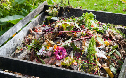 Vermicomposting: How to Worm Your Way Into Composting Heaven