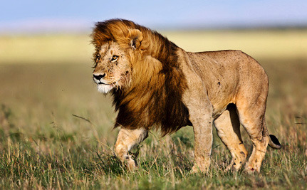 Victory! Another Major Airline Bans Hunting Trophies