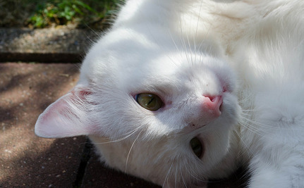 5 Tips for Living With a Deaf Pet