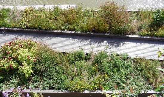 seeds of change barge garden