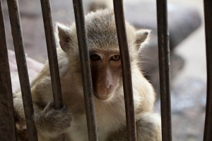 Zoos are sad places for animals. Seeing them in nature is much more fun!