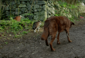 Tervel is a deaf and blind dog who relies on his cat friend for guidance