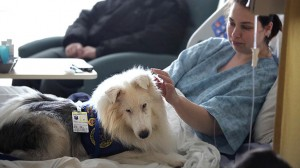 Lothair the deaf dog gives emotional support to patients
