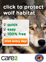 Click to Protect Threatened Wolves