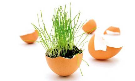 5 Ways to Use Eggshells in Your Garden