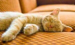 「sleeping cats」の画像検索結果