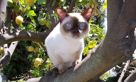 Holistic Cat Care Includes Natural Flea Prevention! (1/2)