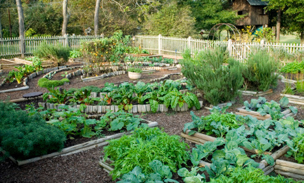 Think About Replacing Lawns with Gardens