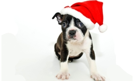 12 Christmas Dangers For Your Pets