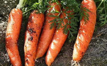 carrots www.checklistmag.com