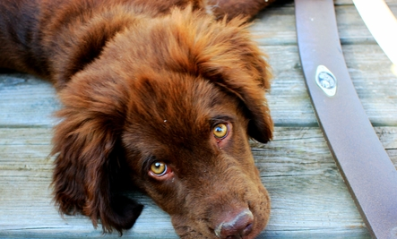 6 Superfoods for Your Dog