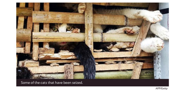 Cats Intended for Eating in Vietnam Saved from Truck -- Tell Authorities Not to Kill Them!