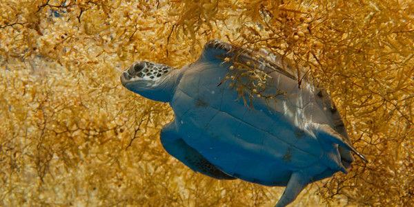 Ask Bermuda to Establish the Largest Marine Reserve in the Atlantic