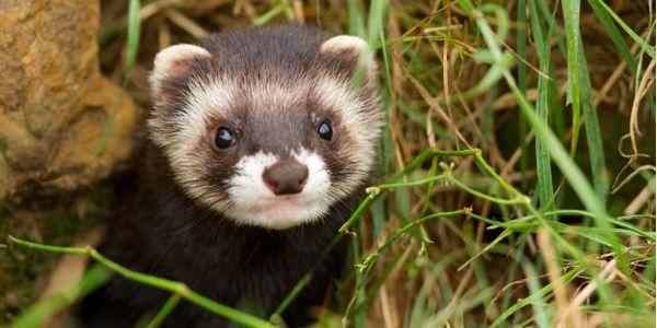 Help Stop Rogue Wildlife-killing Agency
