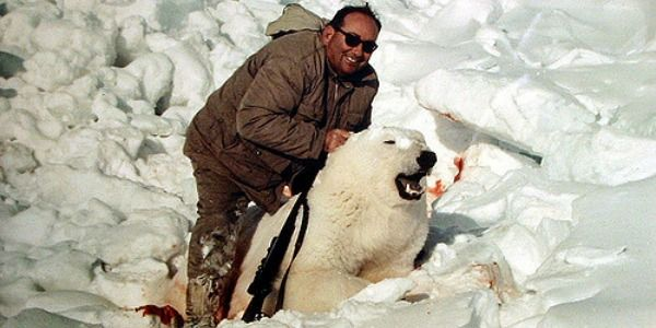 Stop polar bear hunting as a sport!