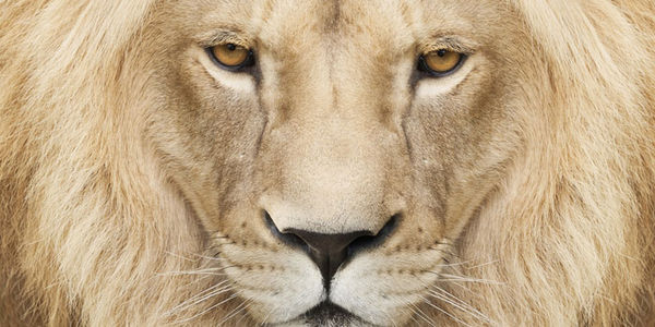 Report: Cecil's Brother Jericho Possibly Killed Saturday - Take Urgent Action