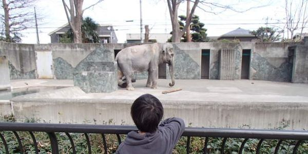 Inokashira Park Zoo in Tokyo: Hanako lives for 61 years alone in a concrete prison! Give her a real life or send her to a sanctuary!