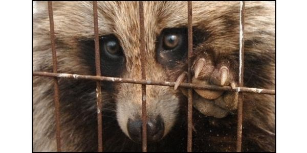 Stop Selling Dog Fur