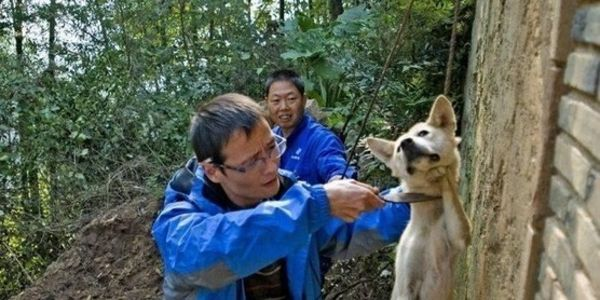 Please, Stop Immediately the Brutal Slaughtering of Dogs in China