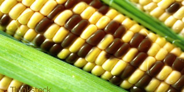 Supplement Manufacturers: Don't HIDE GMO Ingredients!