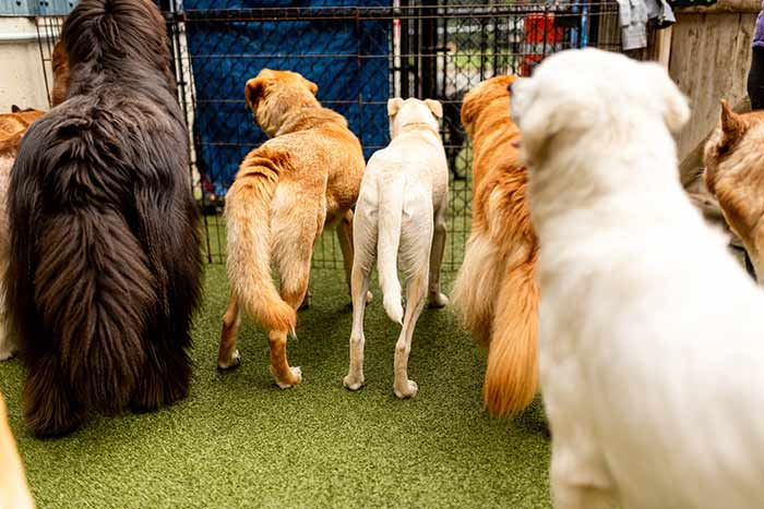 group of dogs getting acquainted