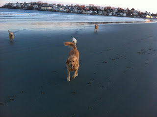 dog beach visiting north shore ma
