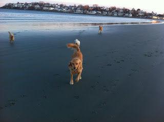 dog beach visiting north shore ma
