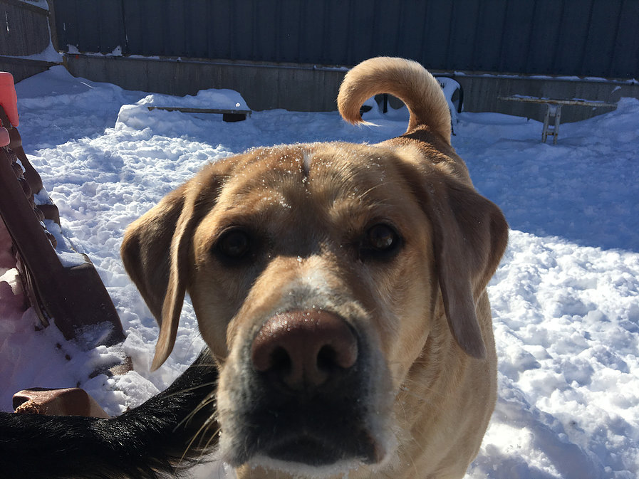 snow closing notice at dingos dogsitting service