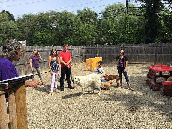 rocco costa dog training