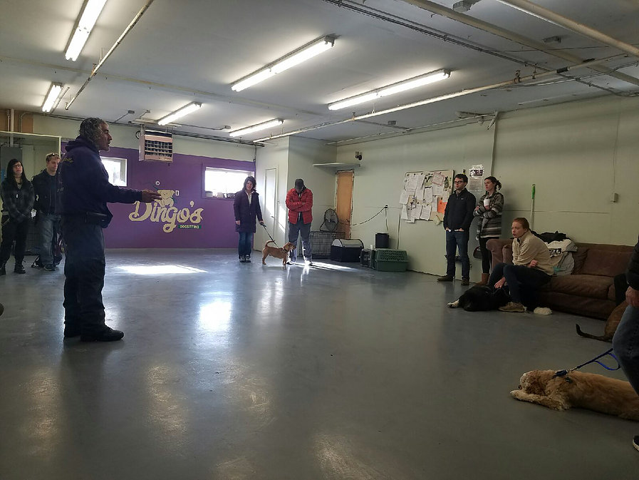 rocco group dog training class