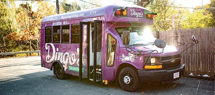 dingos daycare big purple bus