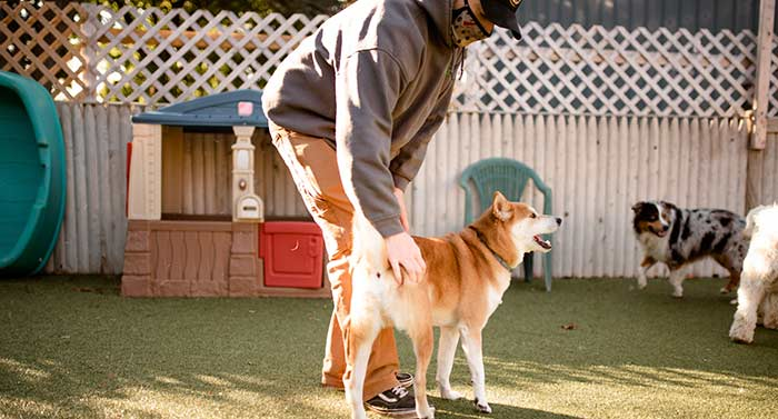 sean with okie at dingos dogsitting