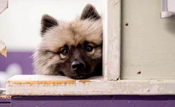 dog looking sad at window