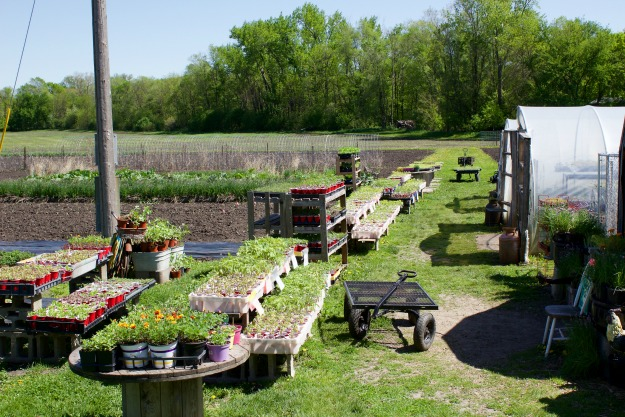 Vegetable Garden Plans 2017