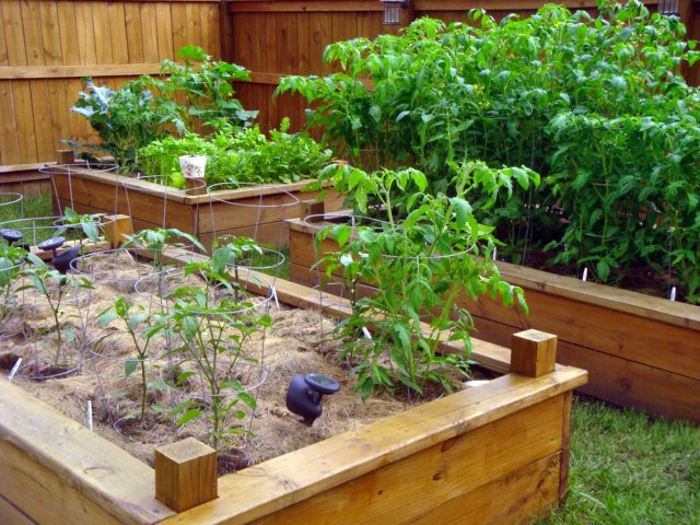 raised garden beds built by Dining Duster