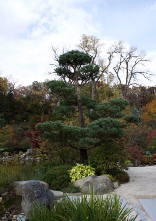 Serenity found at Anderson Japanese Garden