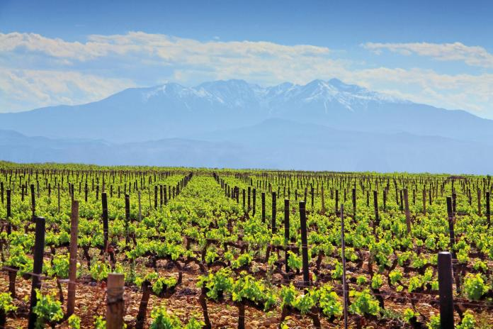 Wines of Roussillon France Wine Region