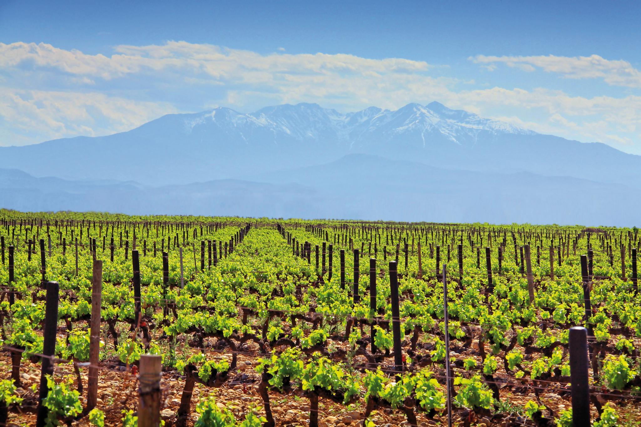 Interview: All about Wines of Roussillon ⋆ The Dining Traveler