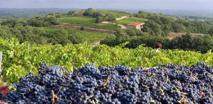 Wines of Roussillion